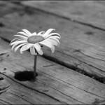 Съемка черно-белых фотографий на цифровой фотоаппарат