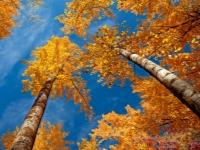 Осень на фото можно показать и косвенно
