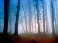 Лес в четырех стенах