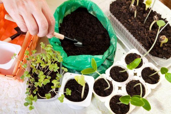 Как подготовить почву для рассады В избранное!