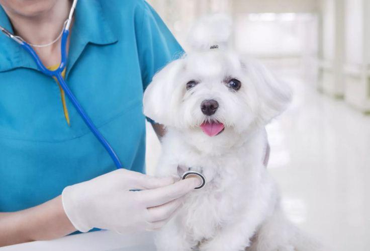 Что следует учесть при выборе ветеринара?