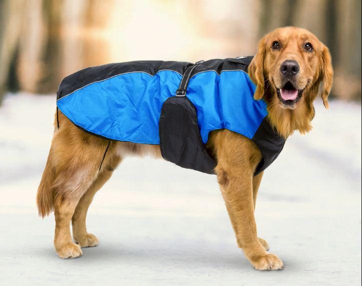 Выбираем одежду для собак